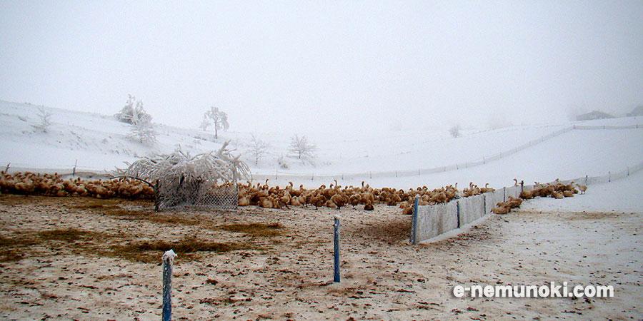 ポーランドマザーグース冬の農場
