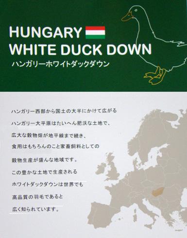ハンガリー産ホワイトダックダウン